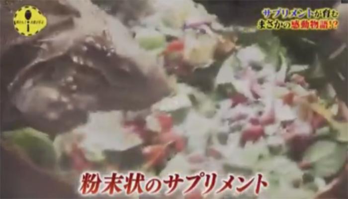 このカメは人間の飼育下では繁殖が難しいとされている絶滅危惧種