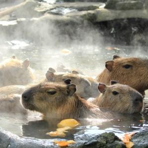 妊婦や赤ちゃんでも冬至にゆず湯に入って大丈夫?柚子の入れ方は?