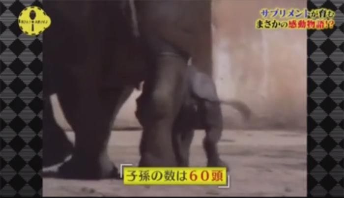 日本の動物園で見られるクロサイ